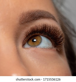 Treatment of Eyelash Extension. Artificial lashes. Woman Eye with Long Eyelashes.