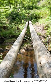 tree across stream leading adventurous path above ground