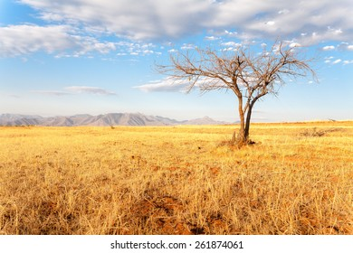 A tree in African Mountains