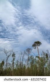 Tree against a blue cloudy sky.