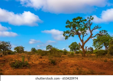 A tree against the blue sky. Africa bush.