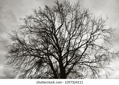 tree against moody sky