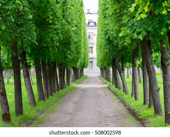 tree alley in the park in summer