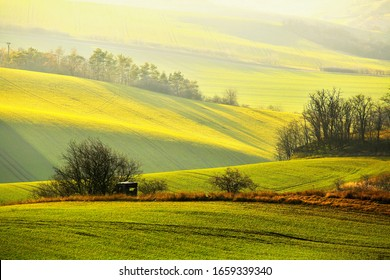 Tree alleys among rolling spring fields, shades of green and brown fields