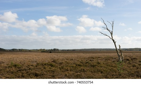 Tree alone on a featureless landscape
