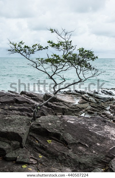 Tree alone sea