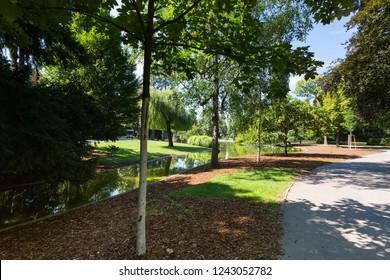 Tree along small pond at Stadtpark, City Park in Vienna, Austria during summer season