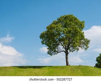 Tree ans sky