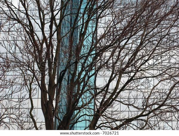 tree with architectonic background