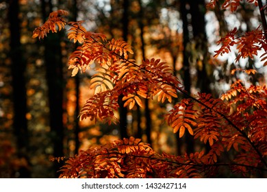 Tree in Atumn forest. Macro nature photography.