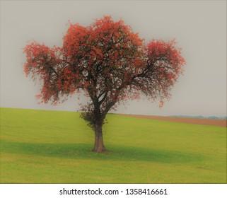 tree atumn park