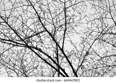 Tree in autumn with a few leaves in black and white.