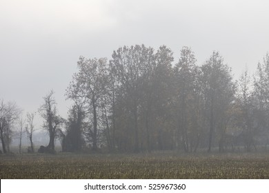 tree in the autumn fog