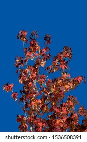 Tree with autumn foliage and blue sky in the background