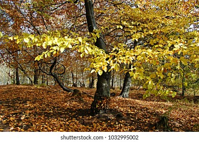 Tree in autumn forest