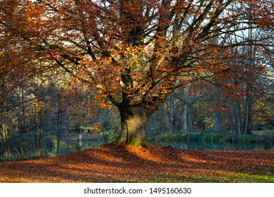 Tree in autumn with red leaves foliage
