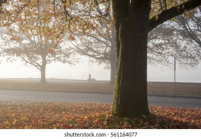 Tree in autumn at Stanley Park, Vancouver, British Columbia, Canada