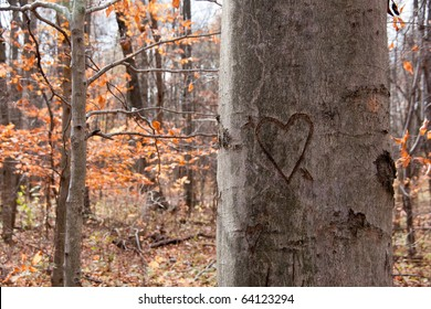 A tree in an autumn woods with a heart with an arrow through it craved into the bark
