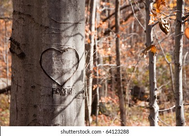 A tree in an autumn woods with a heart and the word forever craved into the bark