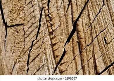 Tree backgound - Shutterstock ID 3298587