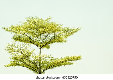 The tree background