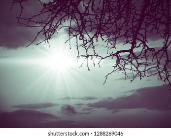 tree background clouds and sun