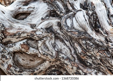 Tree Background. Wood texture detail