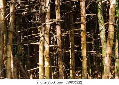Tree Bamboo in Huay Mae Kamin National Park, Kanchanaburi, Thailand