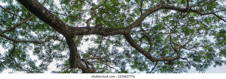 Tree banner with large branches extending out.