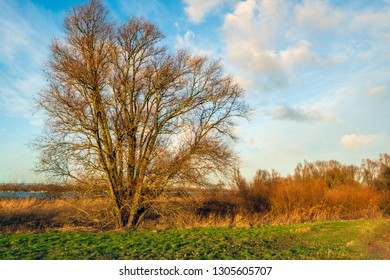 Tree with bare branches in the light of the setting sun in the winter season. The photo was taken on the bank of a creek in the Dutch National Park Biesbosch, North Brabant.
