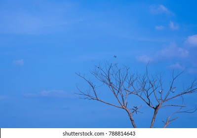 Tree Bare  Branches on a  pale blue sky background copy space