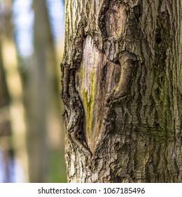 Tree Bark with Bokeh