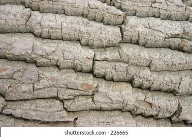 Tree bark closeup.