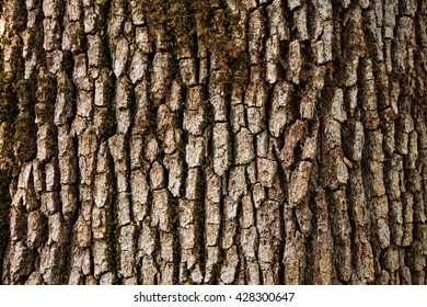 Tree bark detail background.