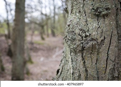 Tree bark detail in a forest in Springtime