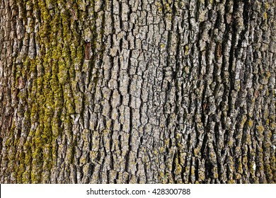 Tree bark detail with moss.