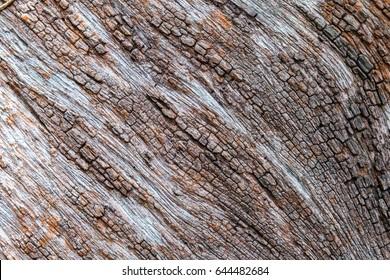 Tree bark detail texture background