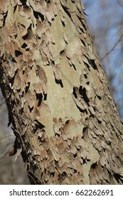 Tree bark in the forest.