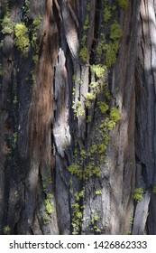 Tree Bark with Green Moss