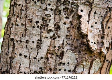 Tree bark with insect holes