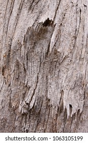 Tree bark as a natural textured background