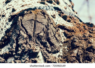 tree bark in nature