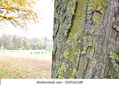 tree bark on the background of the autumn landscape