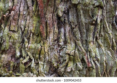 Tree Bark Pattern