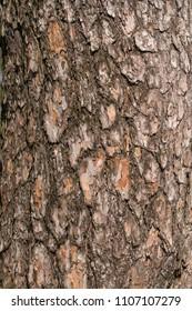 Tree bark pattern - pine
