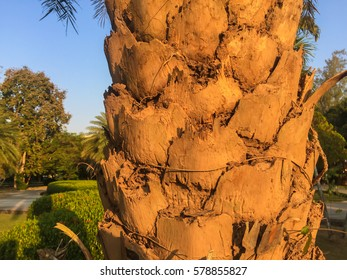 tree bark at shadowy sunset color