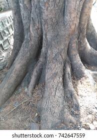 The Tree Bark texture.