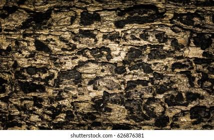 Tree bark texture background