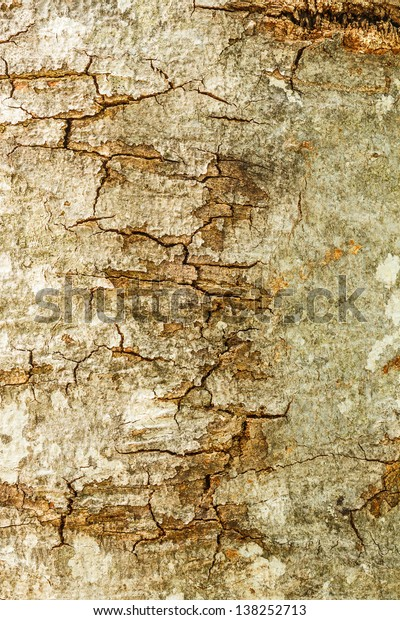 Tree bark texture for background