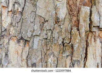 Tree bark texture. Close up. Selective focus.